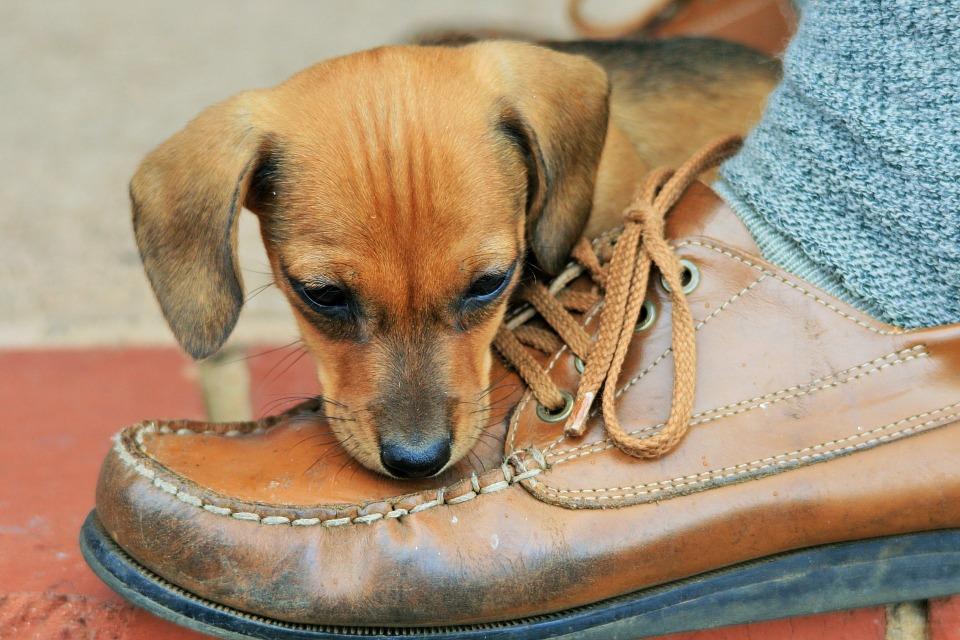 zapato marrón